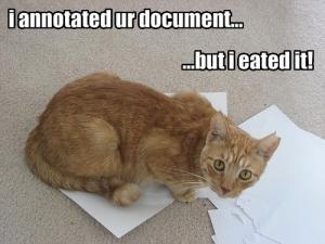 metadata-cat-1